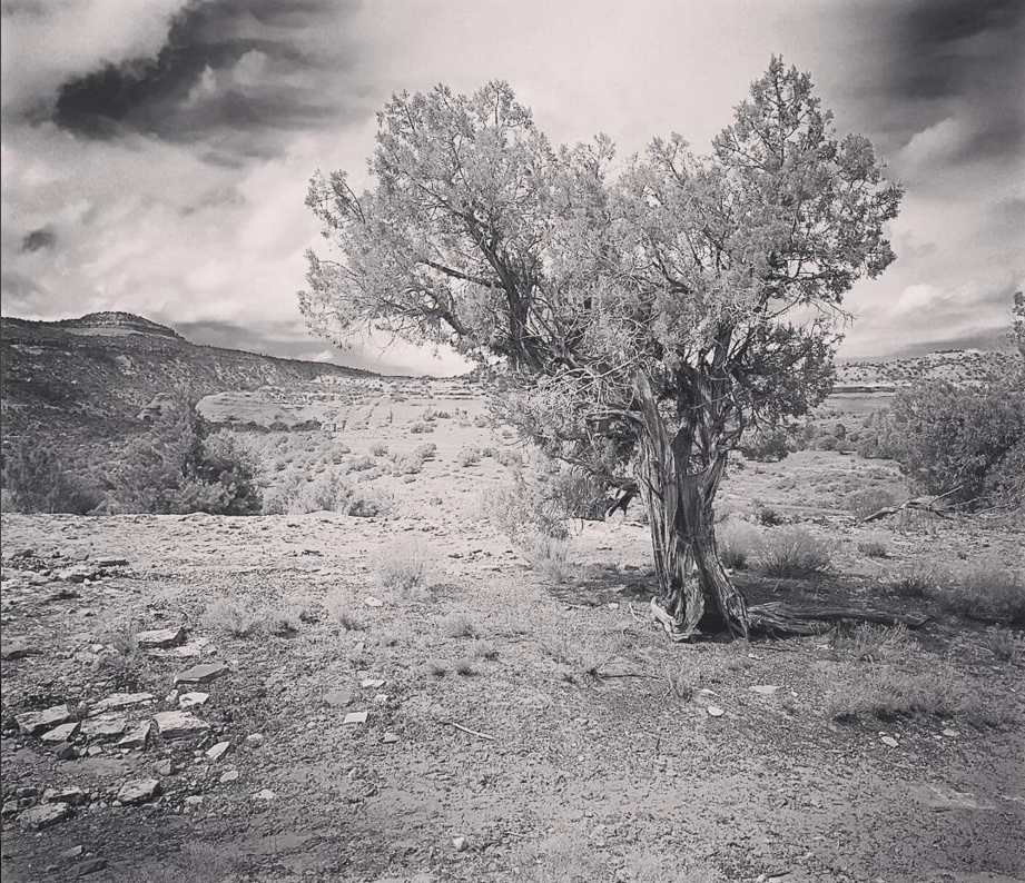 Ode to a Juniper Tree ©Kellie Day poems